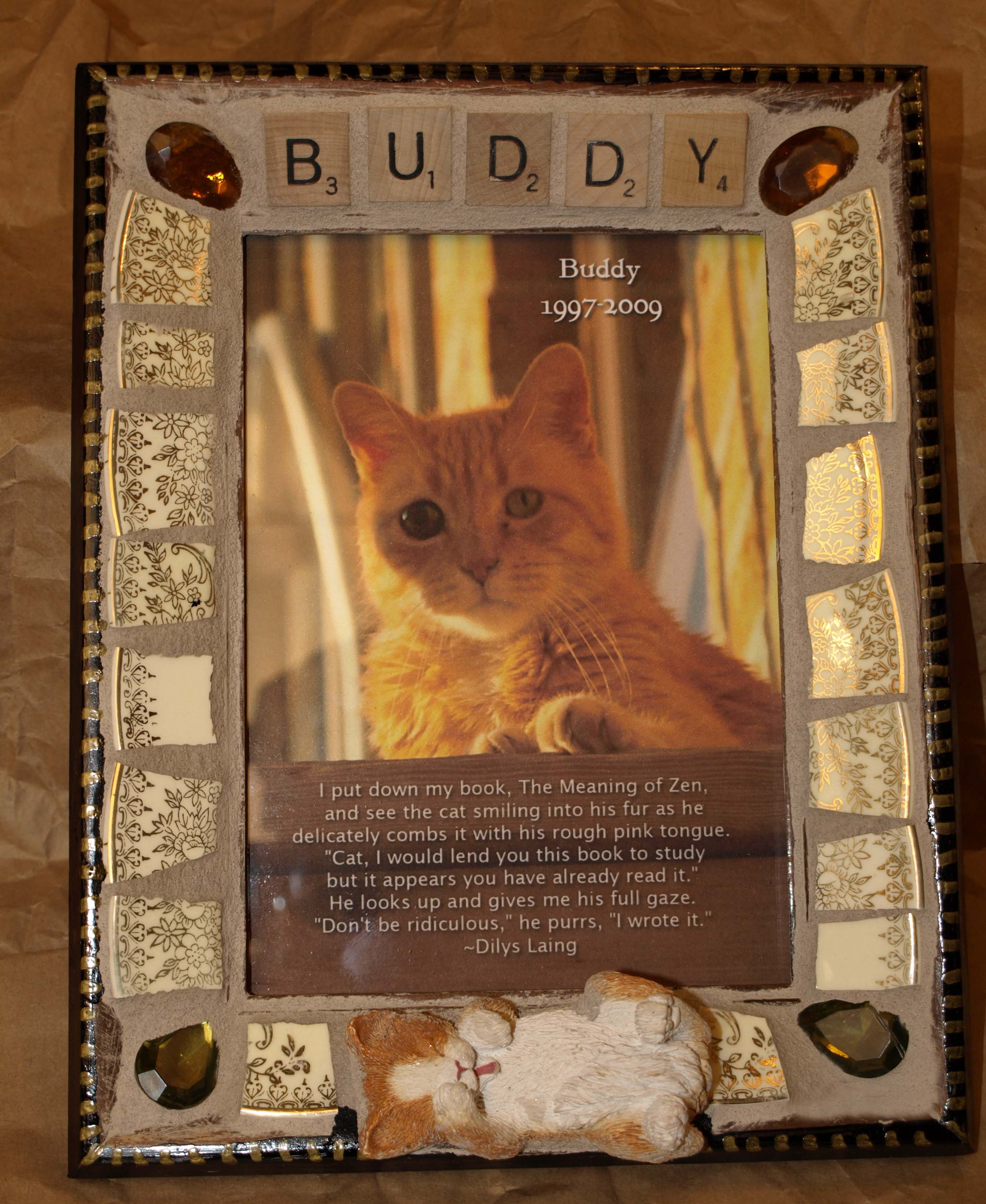 Buddy the Wonder Cat