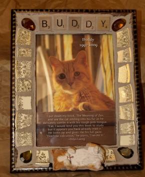 Buddy the Wonder Cat