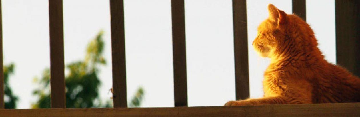 tilegypsy.com • Circa 2009