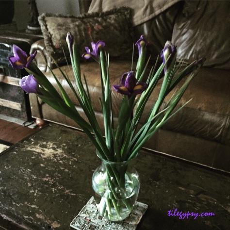 iris-flowers
