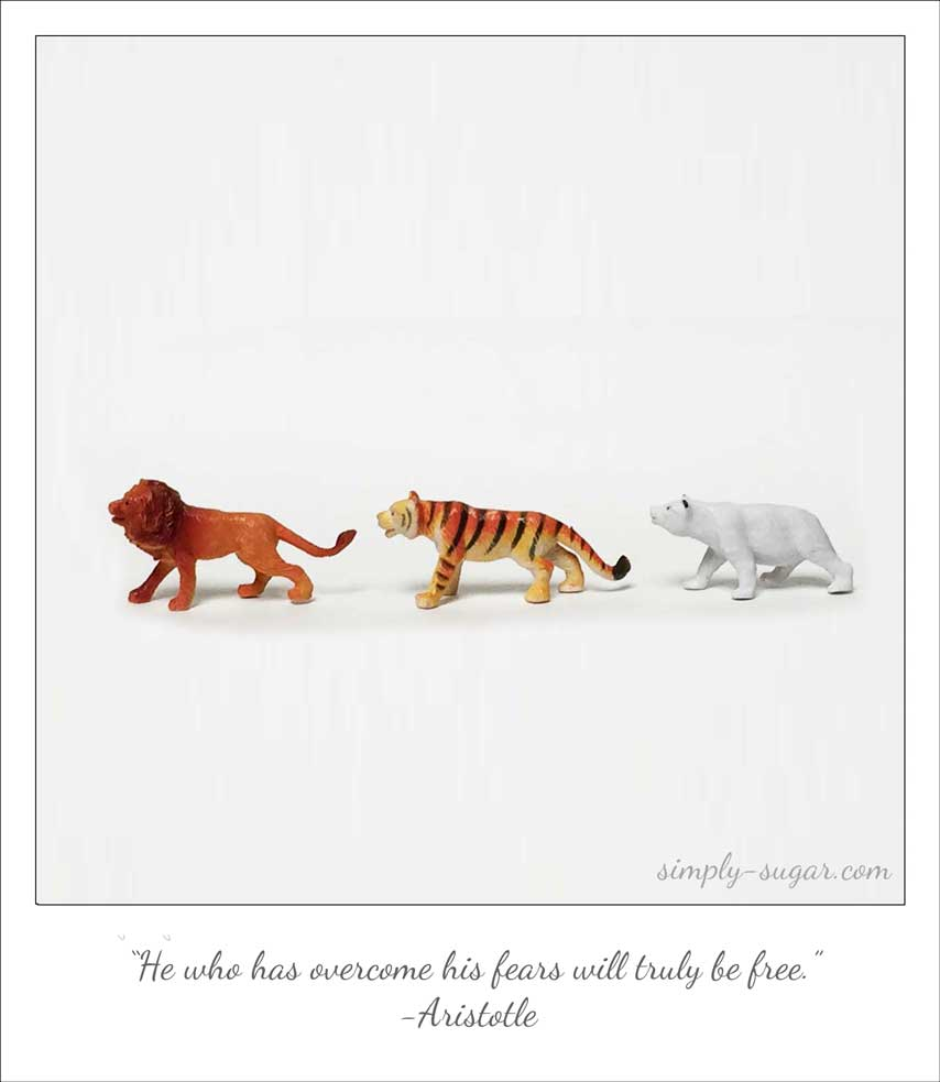 lions and tigers and bears ©mara lee